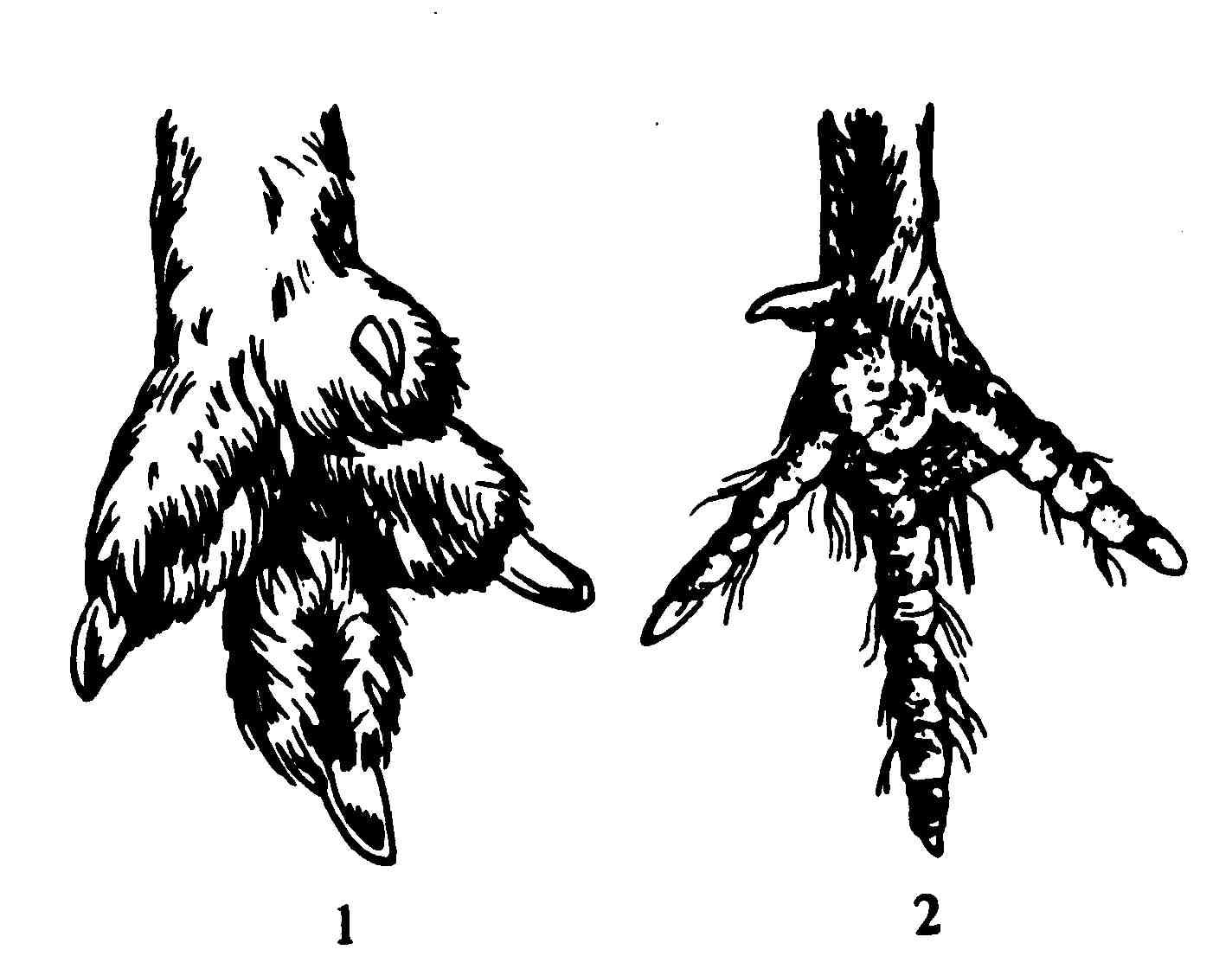 схема расположения конечностей животных