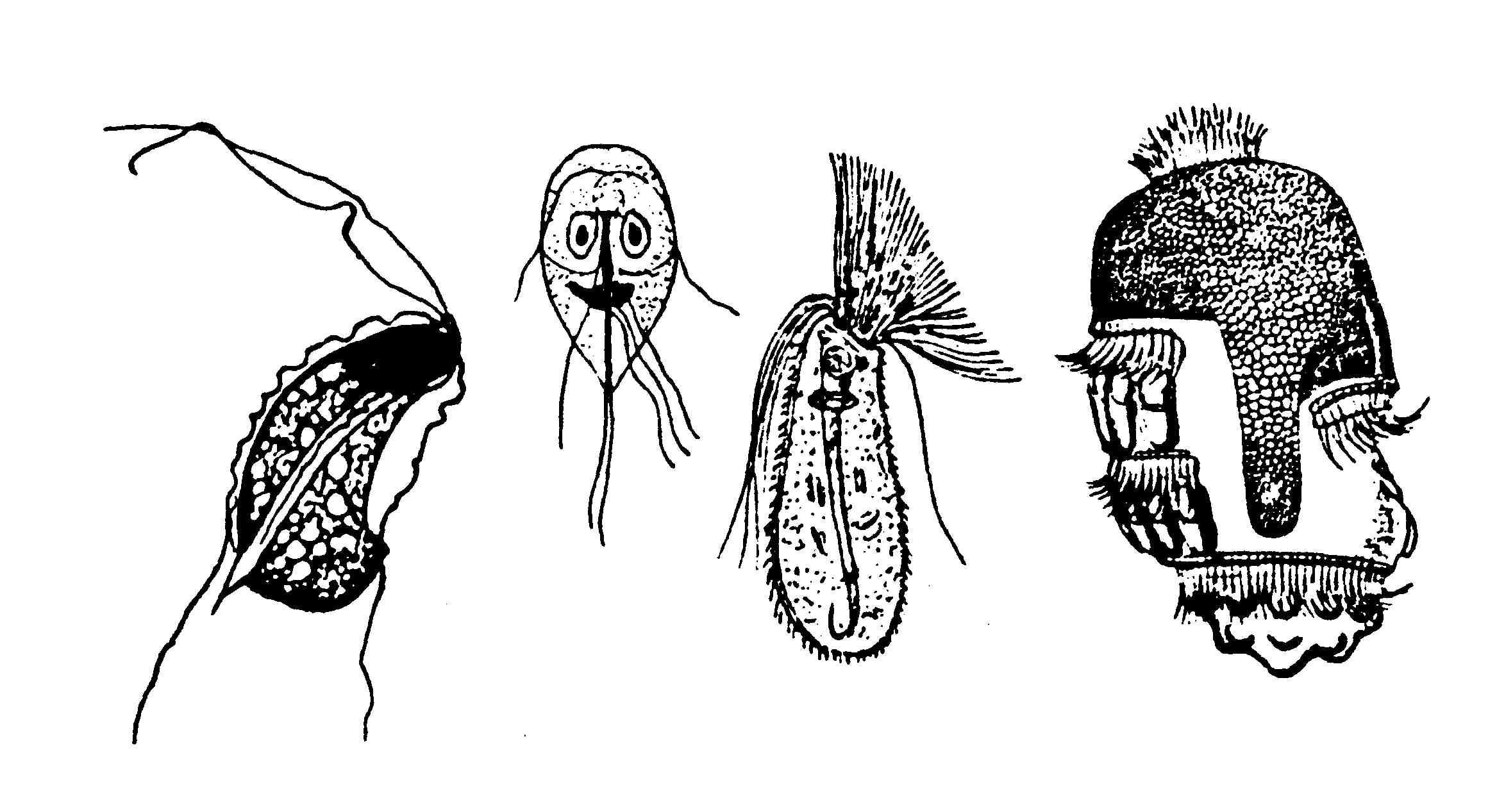 простейшие факультативные паразиты человека